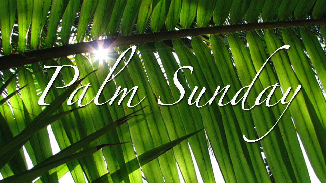 happy palm sunday | welcome to nyfifth